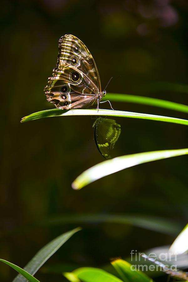 Butterfly Photograph - Spotted Beauty by Leslie Leda