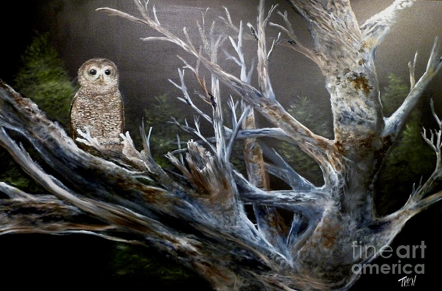spotted owl in tree painting by garland tyson