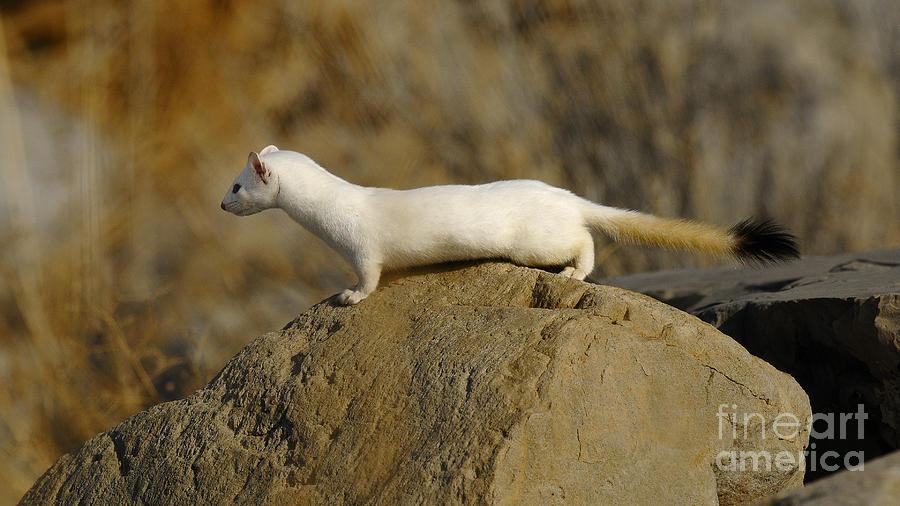 Wildlife Photograph - Spotting The Prey by Dennis Hammer