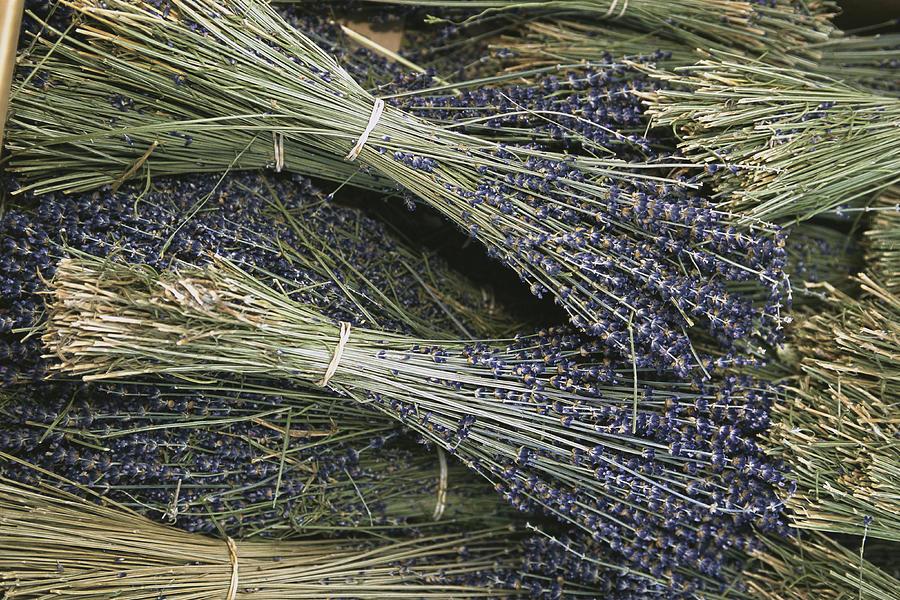 Plants Photograph - Sprigs Of Lavender, Provence Region by Nicole Duplaix