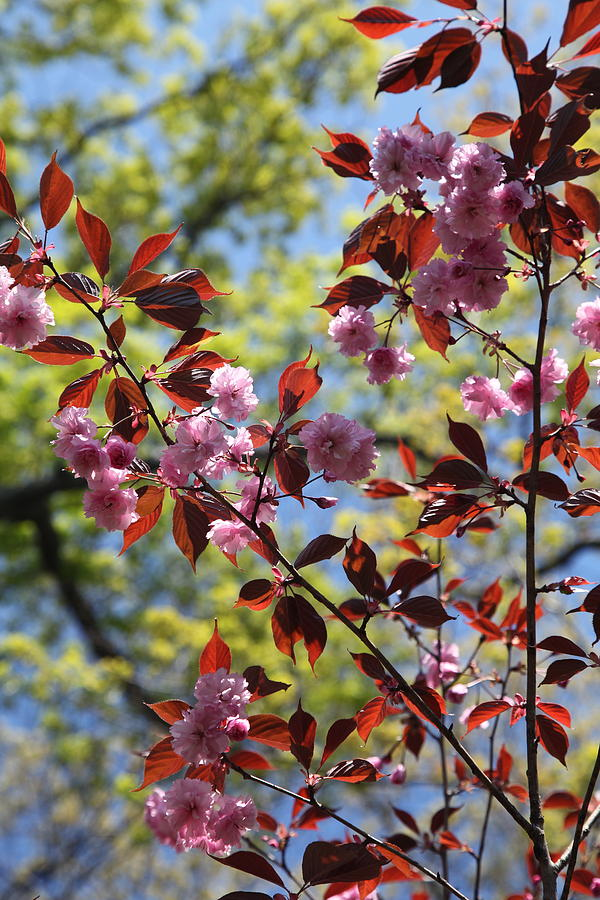 Spring Photograph - Spring 2 by Heidi Horowitz