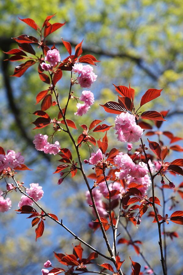 Spring Photograph - Spring 3 by Heidi Horowitz