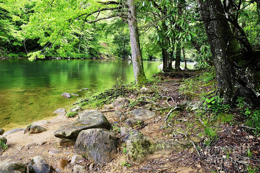 Cranberry River Photograph - Spring Along Cranberry River by Thomas R Fletcher