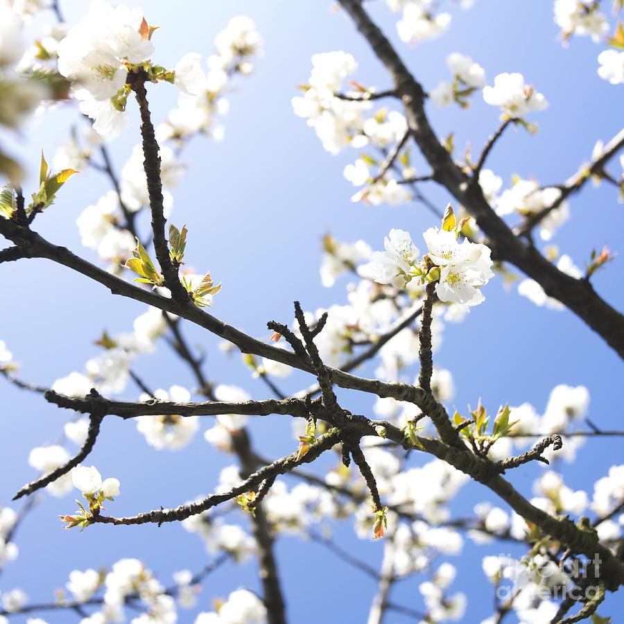 Outdoors Photograph - Spring by Bernard Jaubert