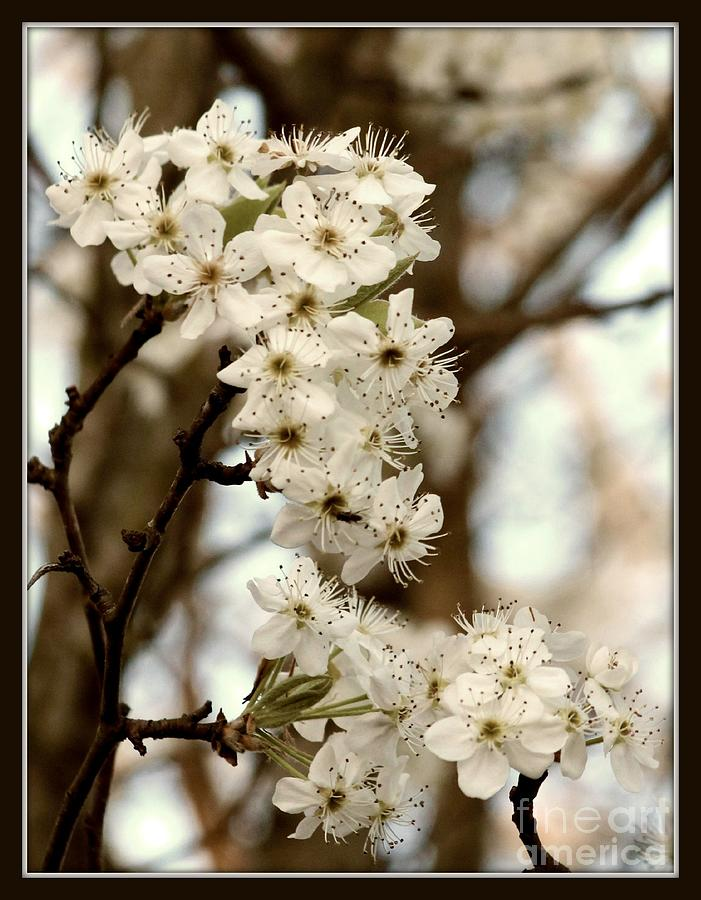 Spring Photograph - Spring Blossoms by Megan Wilson