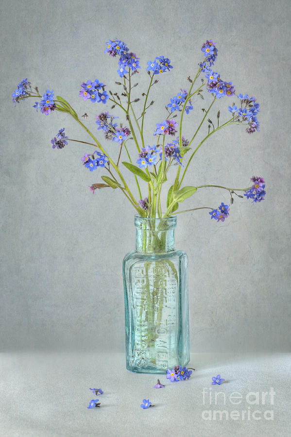 Flowers Photograph - Spring Blues by Jacky Parker