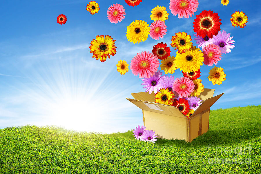 Background Photograph - Spring Delivery by Carlos Caetano