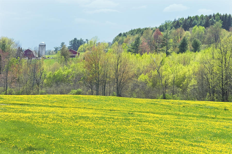 Spring Photograph   Spring Farm Landscape With Dandelion Bloom In Maine  Photograph By Keith Webber Jr