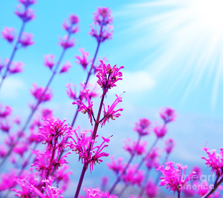 spring flower background photograph by anna om