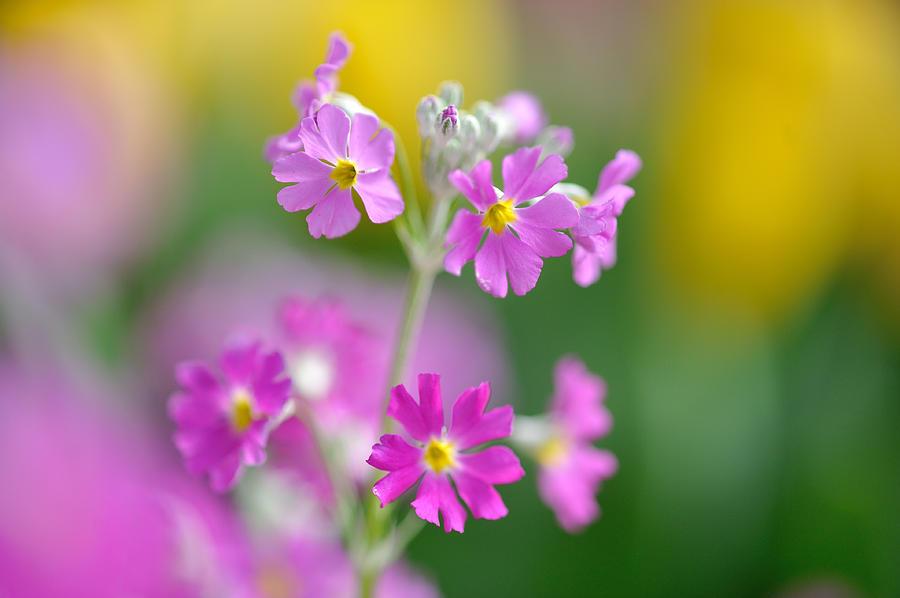 Horizontal Photograph - Spring Flower by Myu-myu