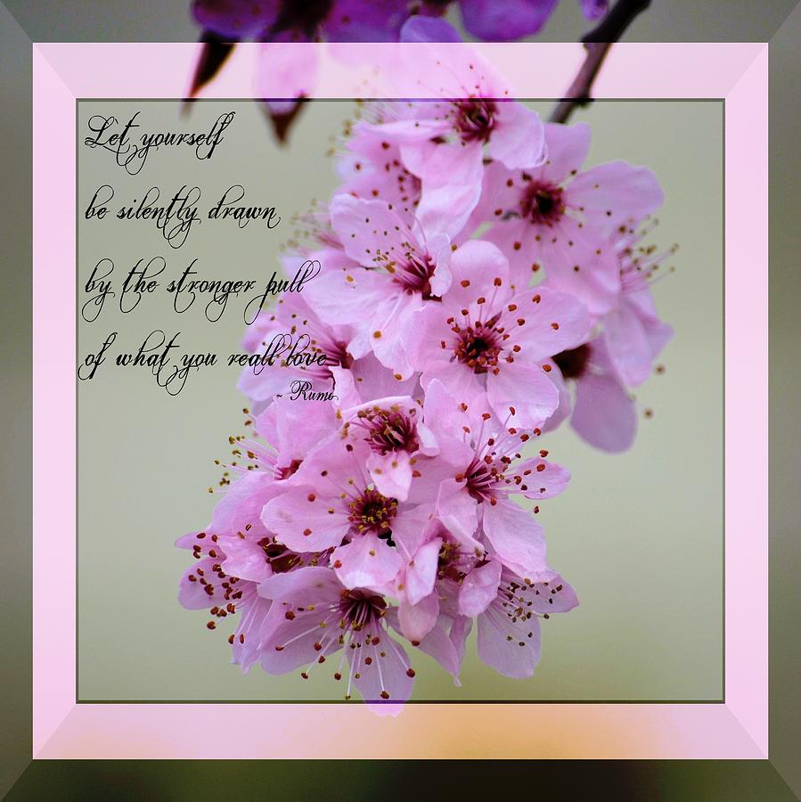 Spring flowering tree inspirational rumi floral photograph by p s rumi quote photograph spring flowering tree inspirational rumi floral by p s mightylinksfo