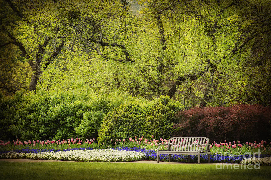 Spring Garden Photograph - Spring Garden by Cheryl Davis