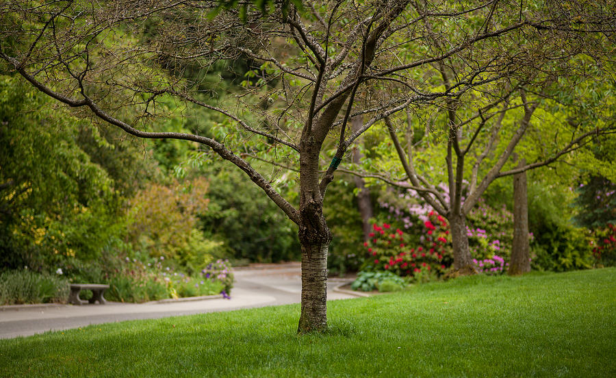 Spring Photograph - Spring Garden Landscape by Mike Reid