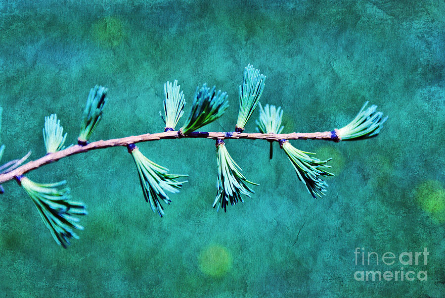 tree Branch Photograph - Spring Has Sprung by Aimelle