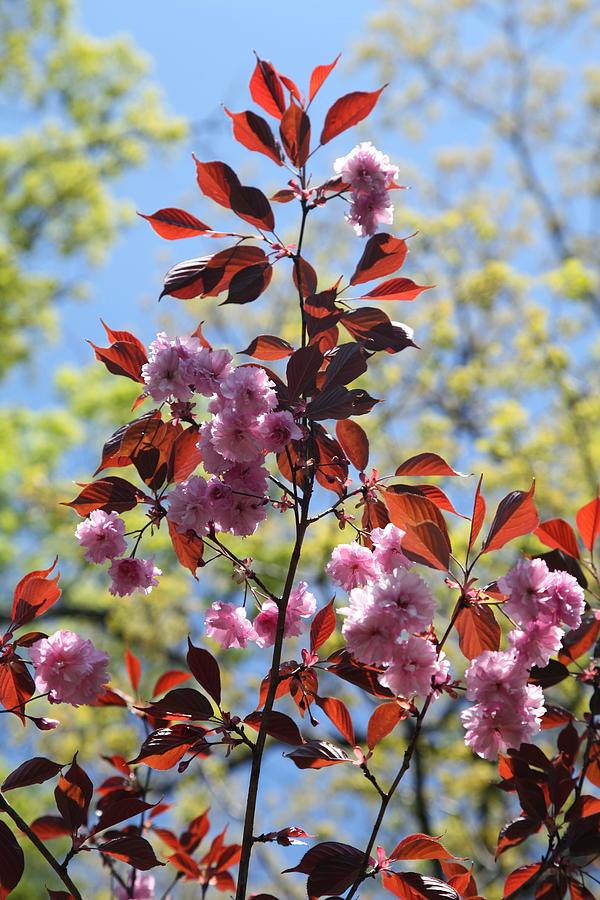 Spring I Photograph by Heidi Horowitz