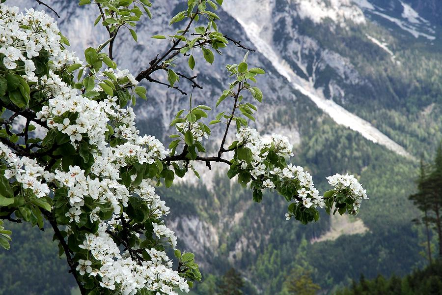 Horizontal Photograph - Spring In Alps by Sola Deo Gloria