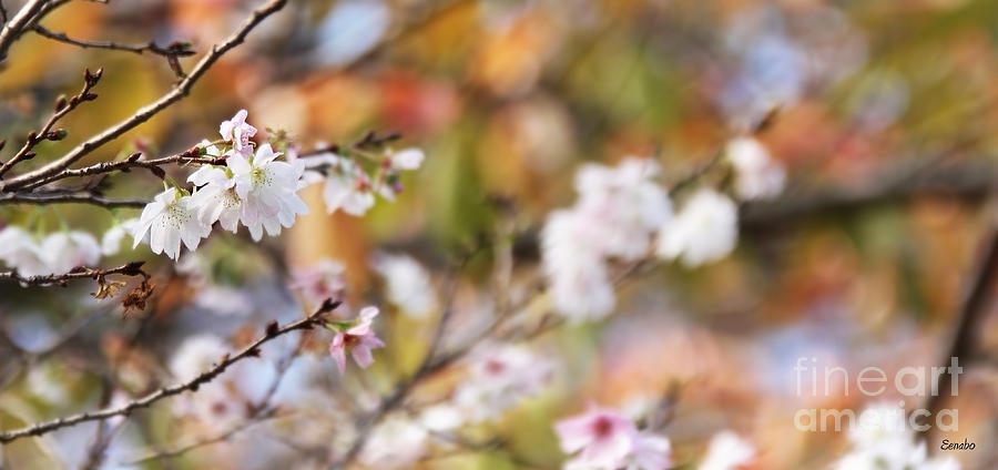 Blossoms Photograph - Spring In Autumn by Eena Bo