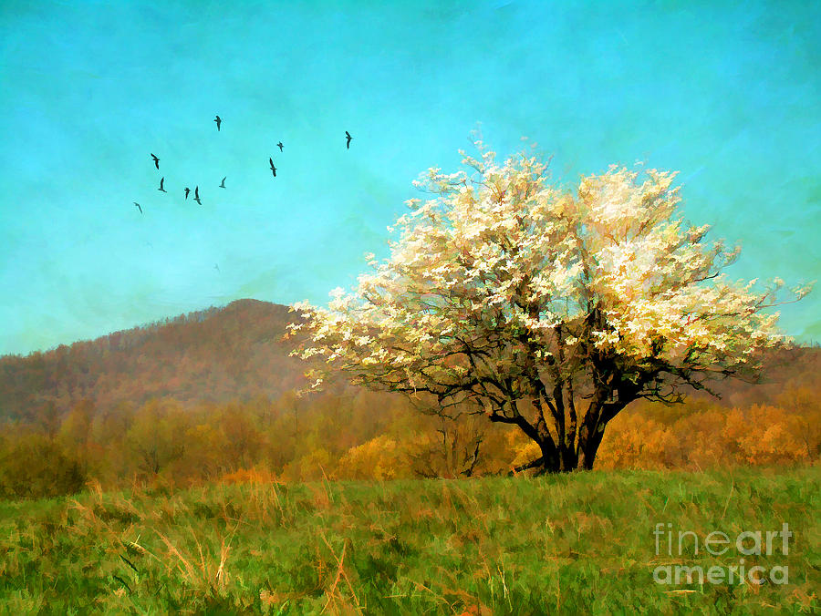 America Photograph - Spring In The Mountains by Darren Fisher