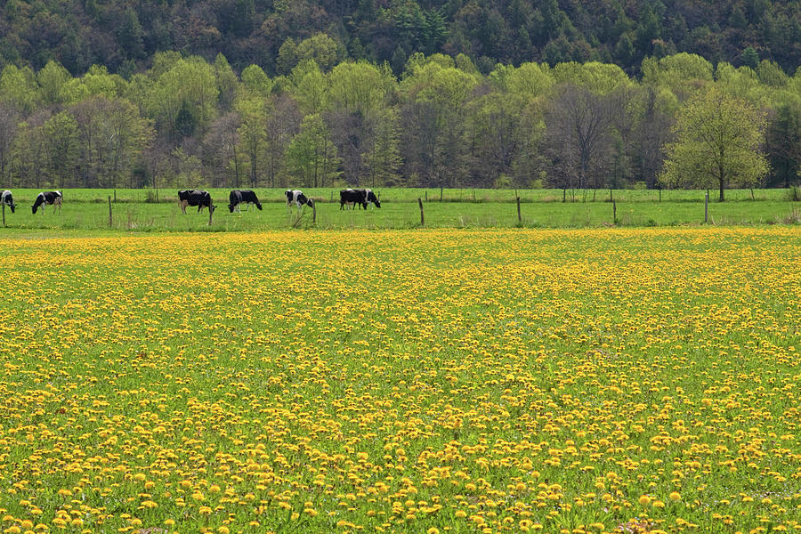 Blossom Photograph - Spring Meadow Flowers by John Stephens