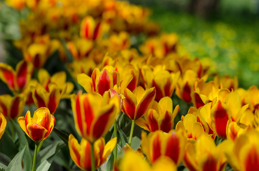 Spring Photograph - Spring mood by Michael Goyberg
