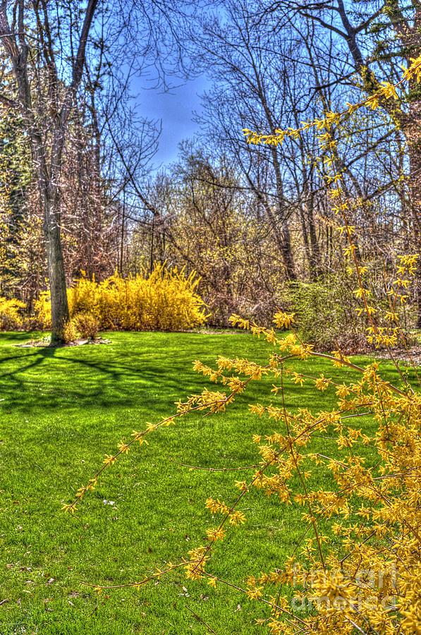 Spring Photograph - Spring Of Joy by Anca Jugarean