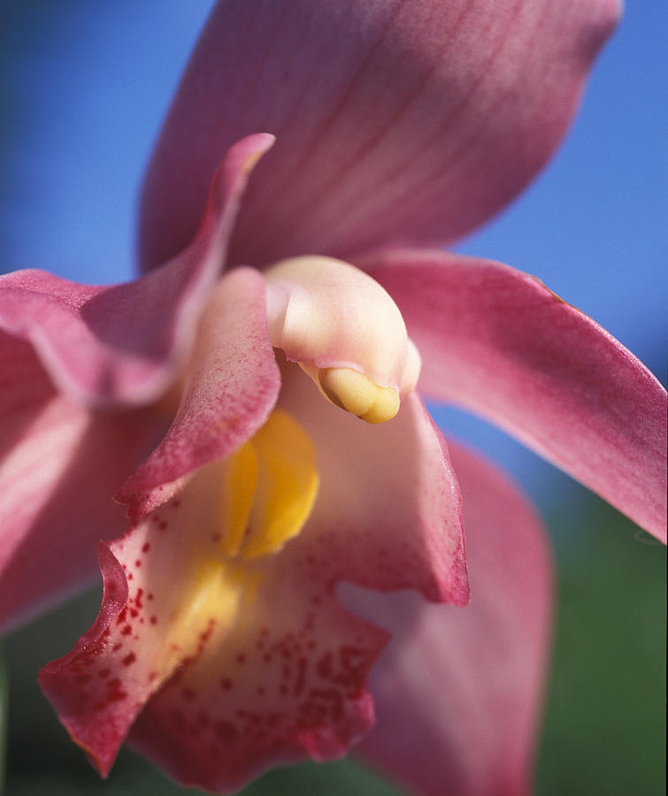 Floral Photograph - Spring Orchid by Kathy Yates