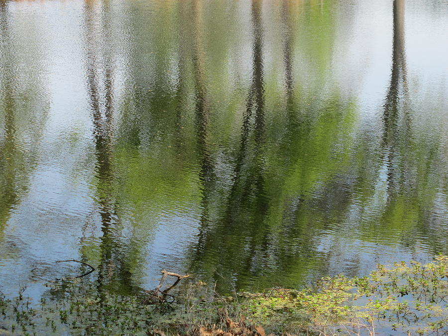 Reflections Photograph - Spring Reflections by Valia Bradshaw