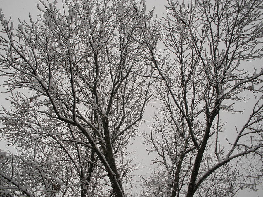 Branches Photograph - Spring Snow by Suzanne Fenster