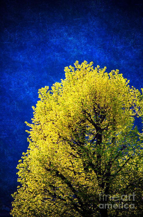 Nature Photograph - Spring Tree by Silvia Ganora