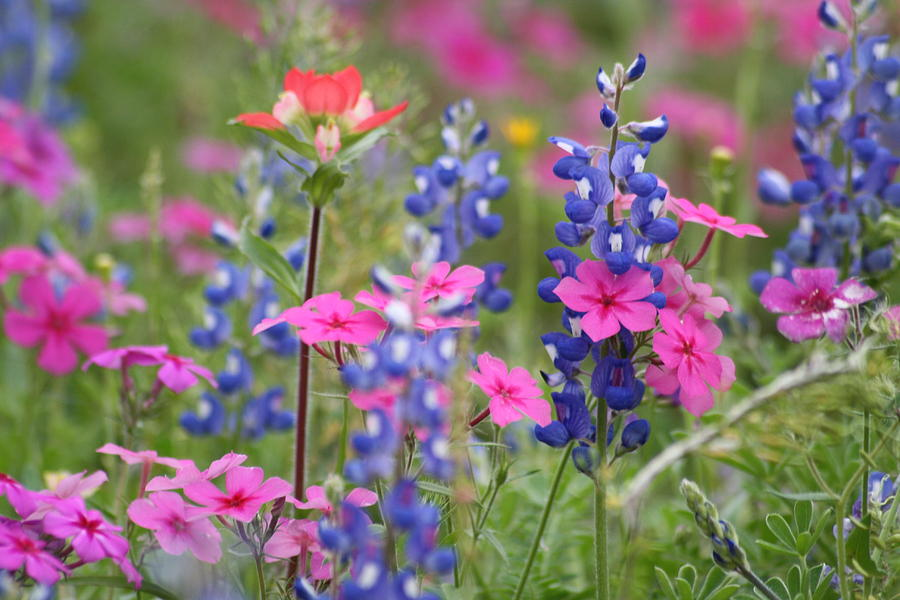 Spring Wildflowers Photograph By Danielle Laird