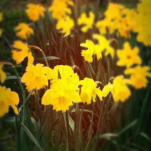 Yellow Photograph - Springs Here by Sam Cottenden