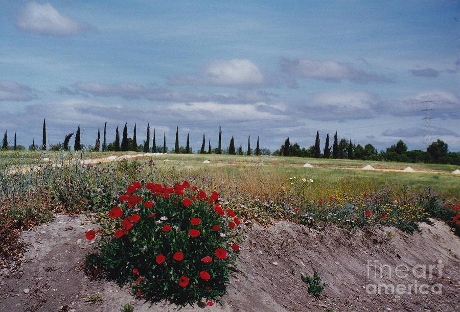 Red Flowers Photograph - Springtime In Spain by Barbara Plattenburg