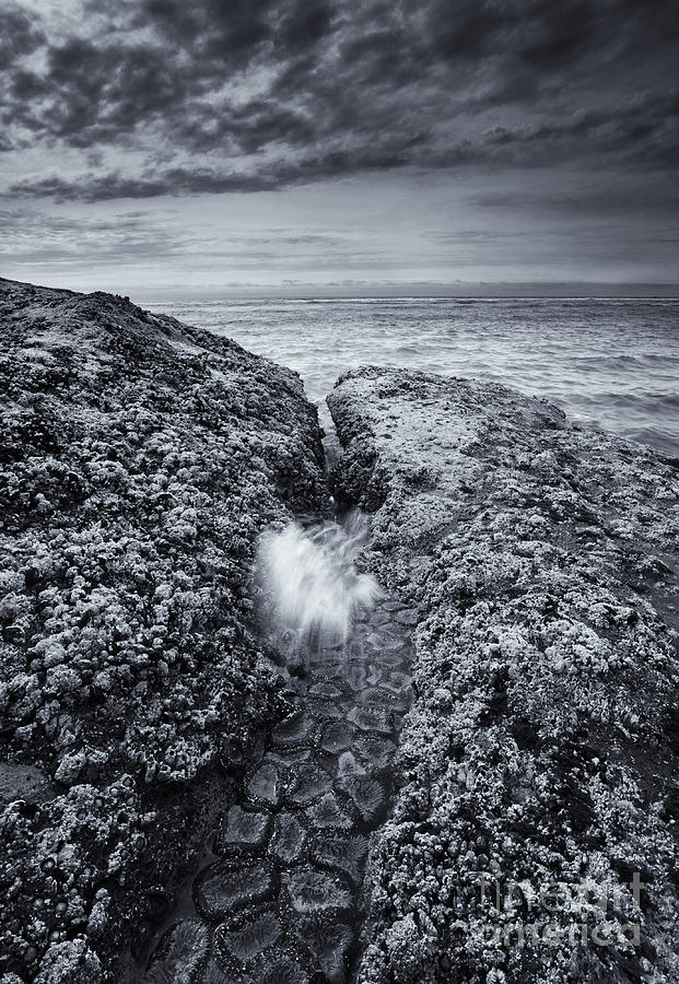 Coast Photograph - Squeezing Through Every Crack by Mike  Dawson