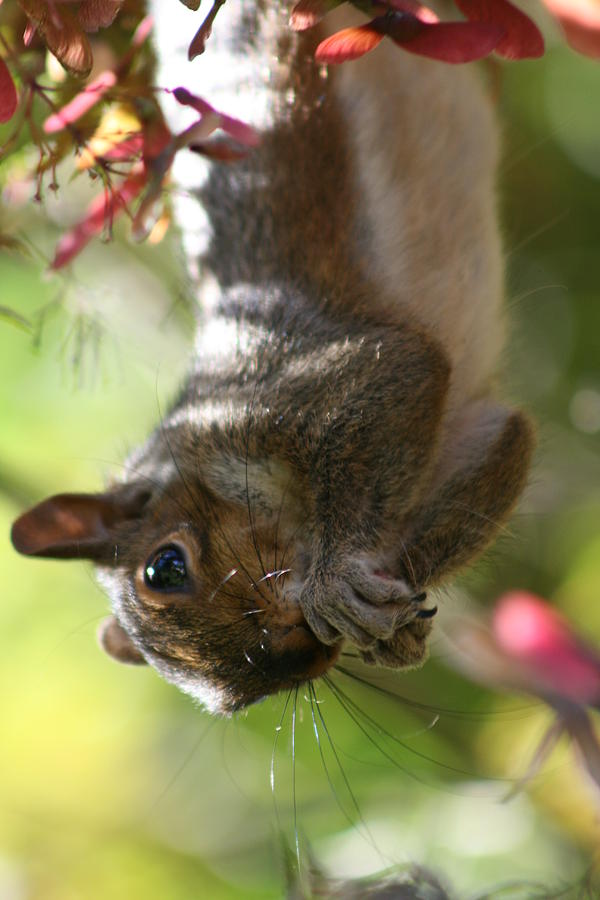 Nature Photograph - Squirrel Dinner by Valia Bradshaw