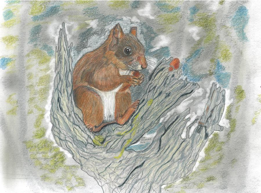 Squirrel Drawing - Squirrel by Don  Gallacher
