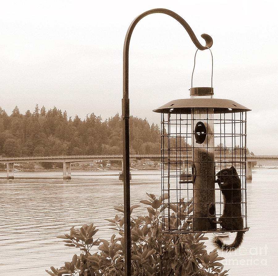Animals Photograph - Squirrel In A Squirrel-proof Bird Feeder by Tanya  Searcy