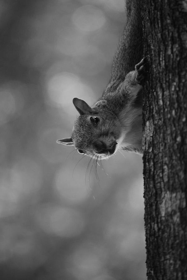 Squirrel Photograph - Squirrel On A Tree by Carrie Munoz