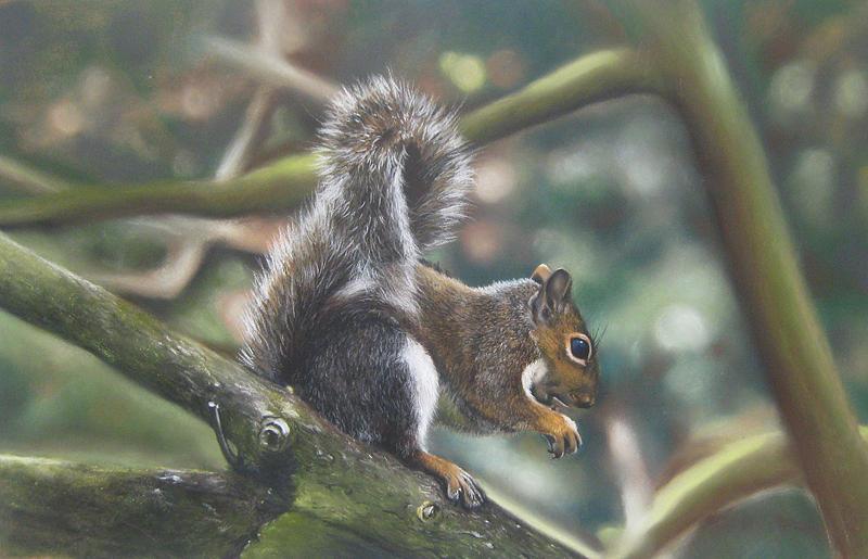 Wildlife Pastel - Squirrel by Rose Baggs