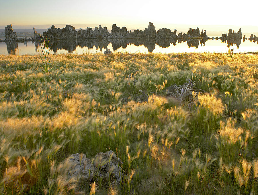 Squirreltail Barley And Tufa Towers Photograph by Tim Fitzharris