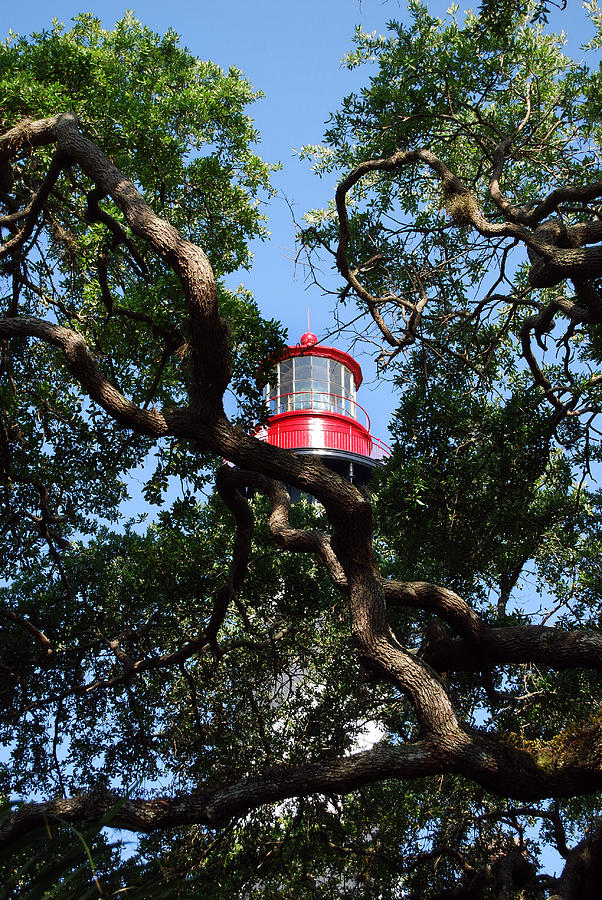 Florida Photograph - St Augustine Tree House by Skip Willits