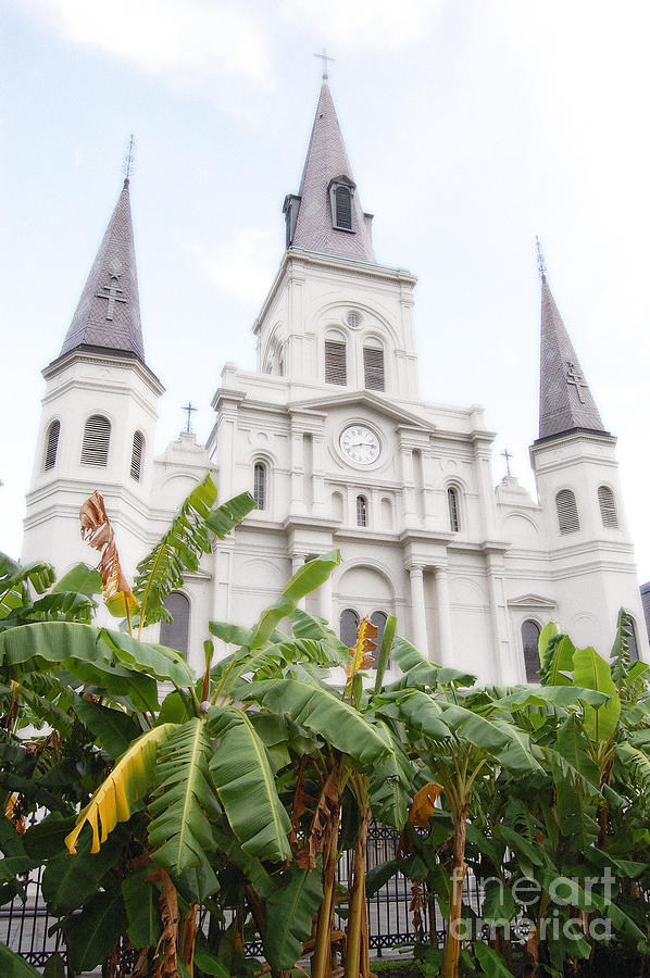 New Orleans Photograph - St Louis Cathedral Rising Above Palms Jackson Square New Orleans Diffuse Glow Digital Art by Shawn OBrien