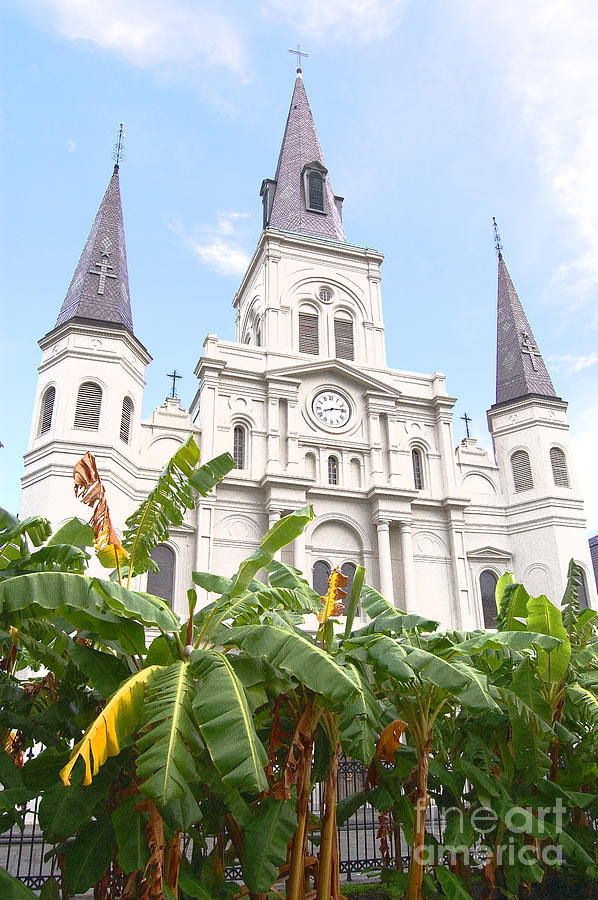 New Orleans Photograph - St Louis Cathedral Rising Above Palms Jackson Square New Orleans Film Grain Digital Art by Shawn OBrien