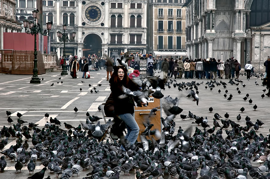 Image result for pigeons in venice italy pictures