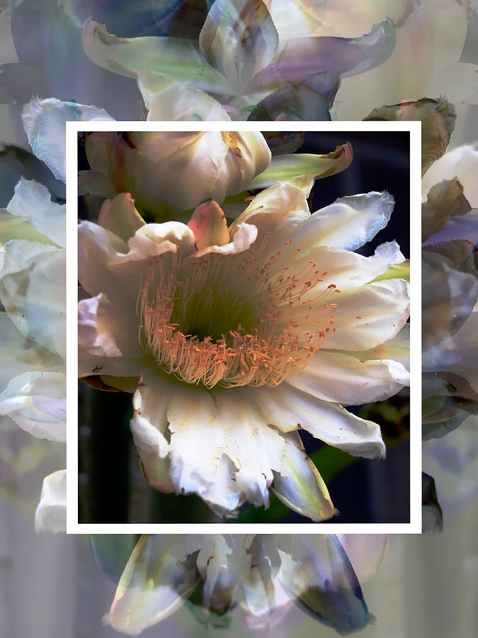 Flower Photograph - Stacked Floral by Regina Arnold