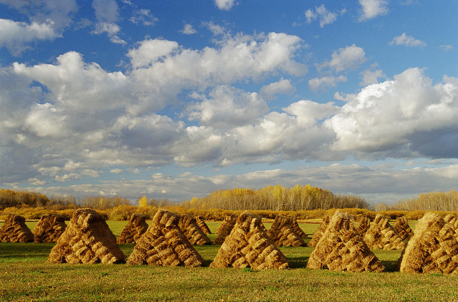 Bundles Photograph - Stacked Hay Bales In Field, Selkirk by Dave Reede