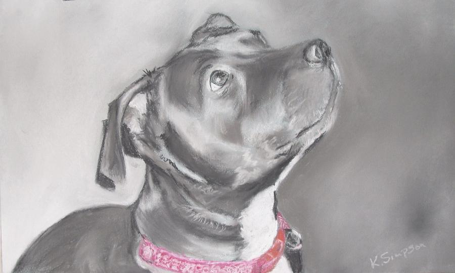 Dog Drawing - Staffordshire Terrier  by Karl Simpson