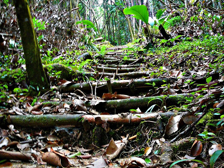 Forest Photograph - Stairs In The Forest by Jenny Senra Pampin