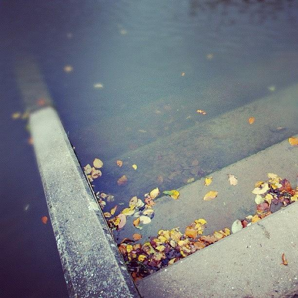 Stair Photograph - Stairs with autumn foliage leading into water by Matthias Hauser