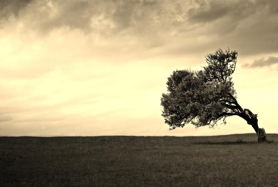 Abstract Photograph - Stand Alone Tree 1 by Sumit Mehndiratta
