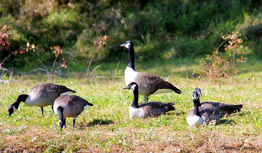 Geese Photograph - Standing Guard by Lorraine Louwerse